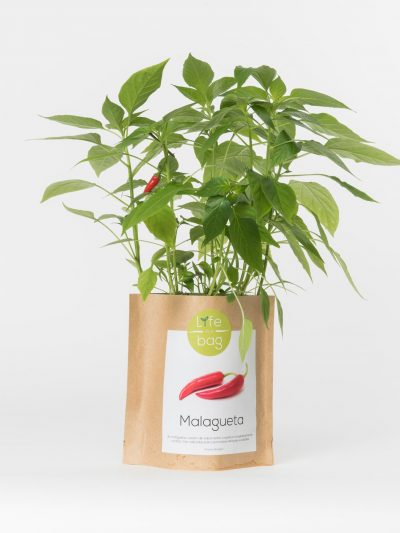 Grow Bag Malagueta
